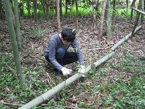 竹を切っているところです